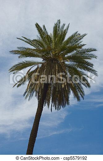 palmtree over blue skies - csp5579192
