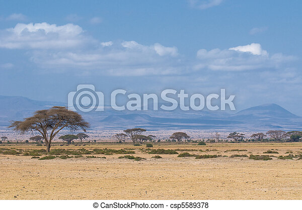 tree in savannah, typical african landscape - csp5589378