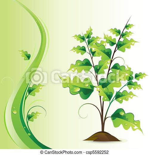 Growing Tree - csp5592252