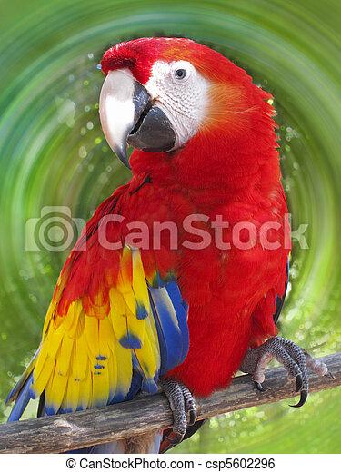 Macaw - csp5602296