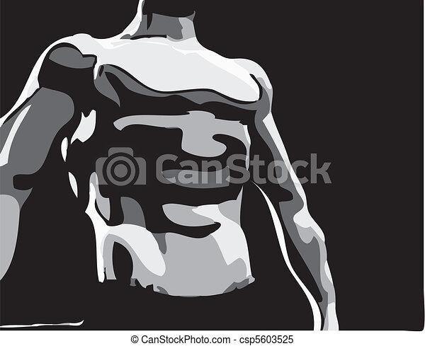 male muscular torso  - csp5603525