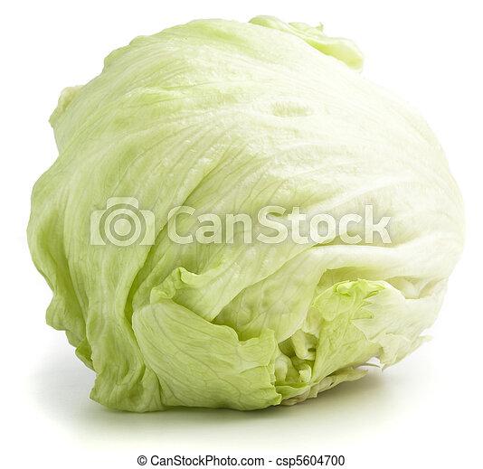 lettuce - csp5604700