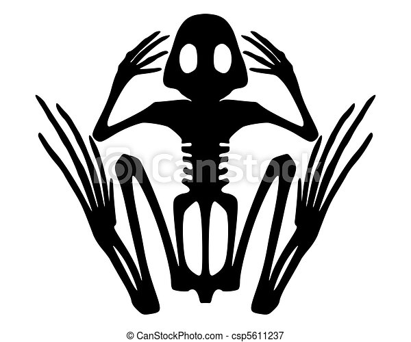 Frog Skeleton Drawing Frog Skeleton Csp5611237