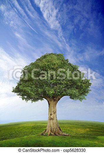 站立, 領域, 樹, 單獨 - csp5628330