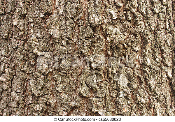 Walnut tree bark - csp5630828