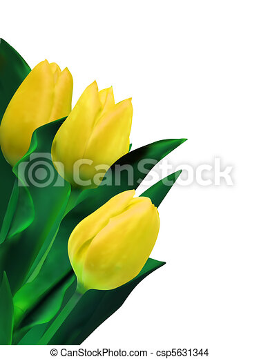 bright yellow tulips isolated on white. EPS 8 - csp5631344