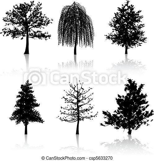 Tree silhouettes  - csp5633270