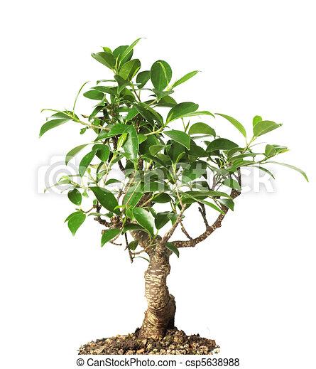 stock illustration von bonsai baum freigestellt auf wei es csp5638988 suchen sie eps clip. Black Bedroom Furniture Sets. Home Design Ideas