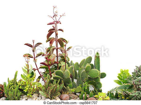 Picture of Front garden with cacti on pebbles and small