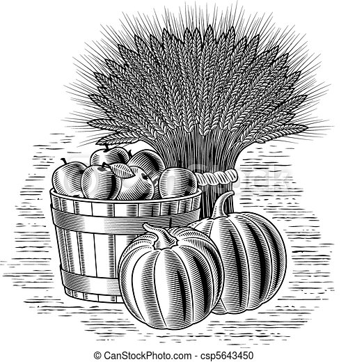 Retro harvest still life b&w - csp5643450