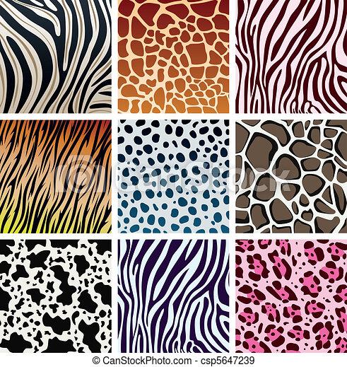 animal skin textures  - csp5647239