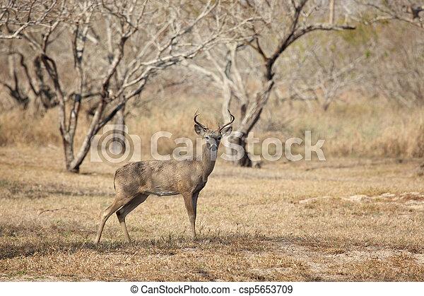 Young Buck - csp5653709