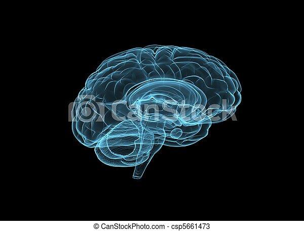 Brain - csp5661473