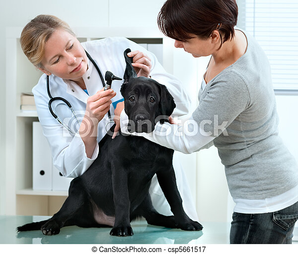 veterinarian - csp5661517