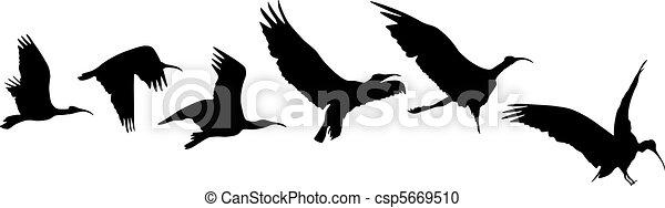 Bird flight and landing - csp5669510