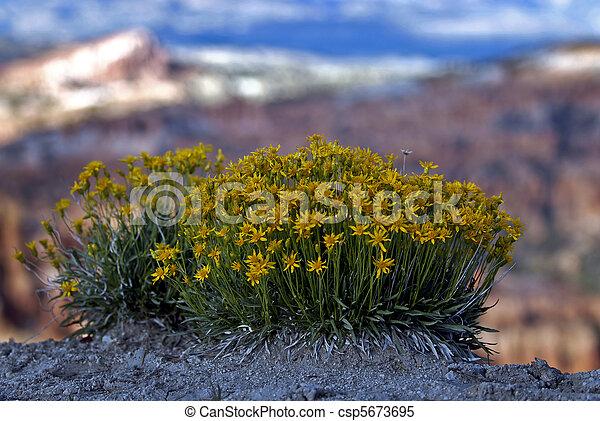 Canyon Flora - csp5673695