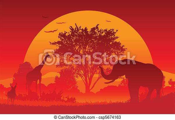 African Safari - csp5674163