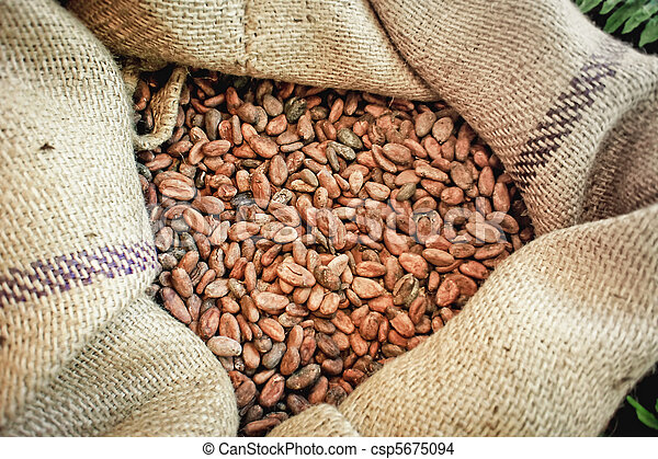 Cacao Beans in a Bag - csp5675094