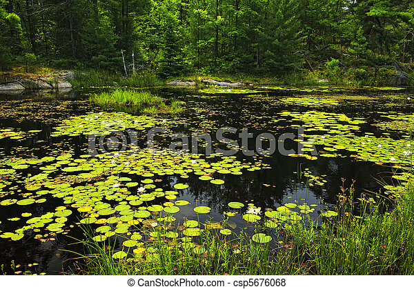 Lily pads on lake - csp5676068