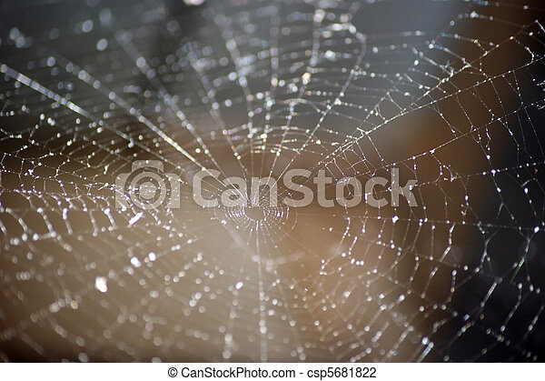 Spider Web Abstract - csp5681822