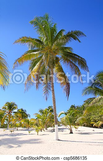 coconut palm trees white sand tropical paradise - csp5686135