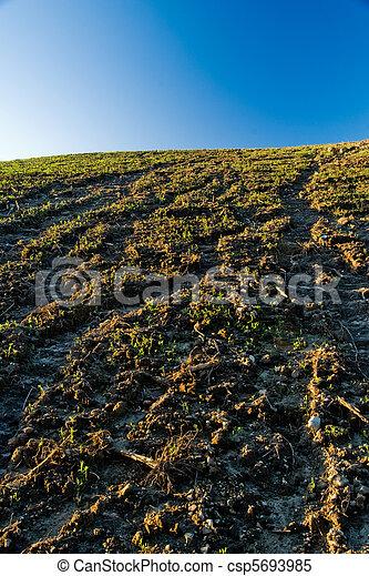 Agriculture - csp5693985
