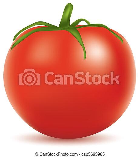 tomato - csp5695965