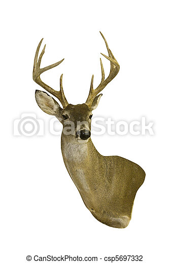 isolated deer head with horns - csp5697332