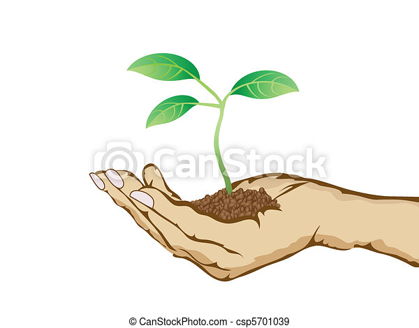 green plant growing in hand - csp5701039