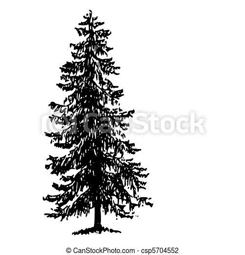Ilustraciones De Vectores De Picea Noruega Noruega
