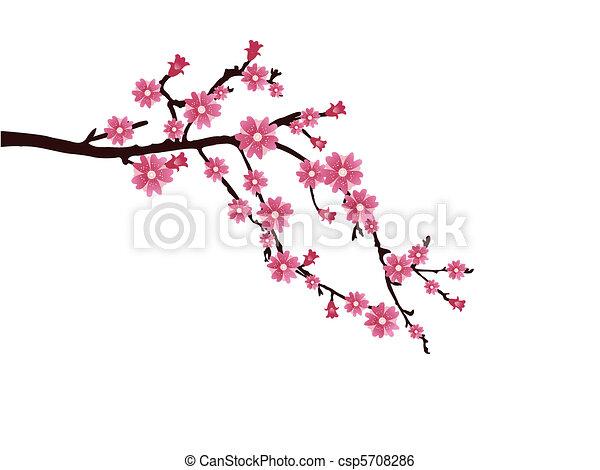 cherry blossom - csp5708286