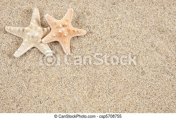 starfish in the beach sand - copy space - csp5708755