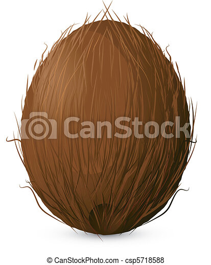 Clip Art Coconut Clip Art coconut illustrations and clip art 13589 royalty free artby magurok7507 on a white background