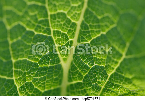 bright green leaf foxglove close-up in backlighting, macro - csp5721671