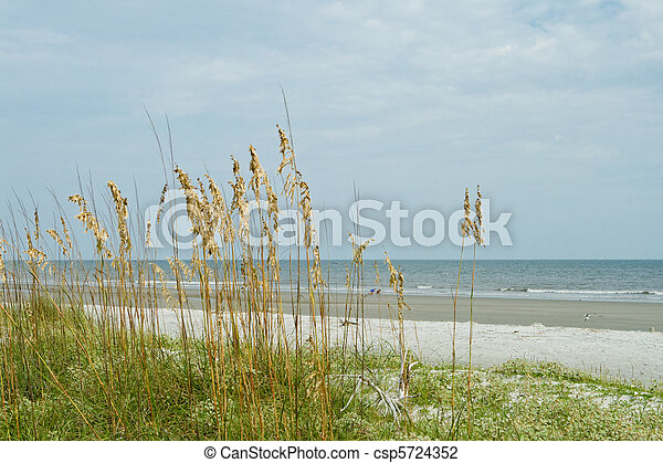 Sea Oat Grass, Sand Dune, Overlooking Ocean, Hilton Head Beach - csp5724352