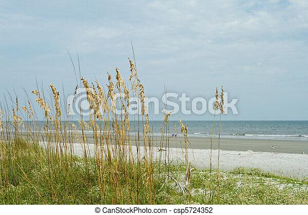 Sea Oat Grass, Sand Dune, Overlooking Ocean, Hilton Head Beach - csp5724352