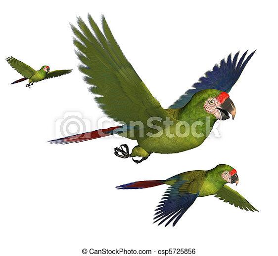 Military Macaws - csp5725856