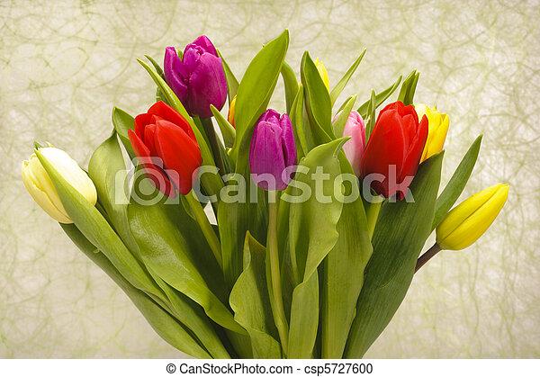 bunch bouquet of tulip flowers - csp5727600