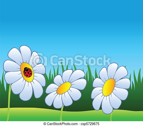 Three daisies and ladybug - csp5729675