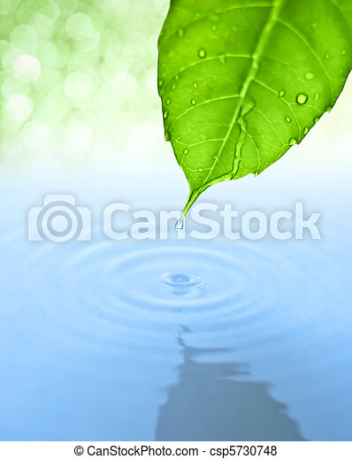Water drop fall from green leaf with ripple - csp5730748