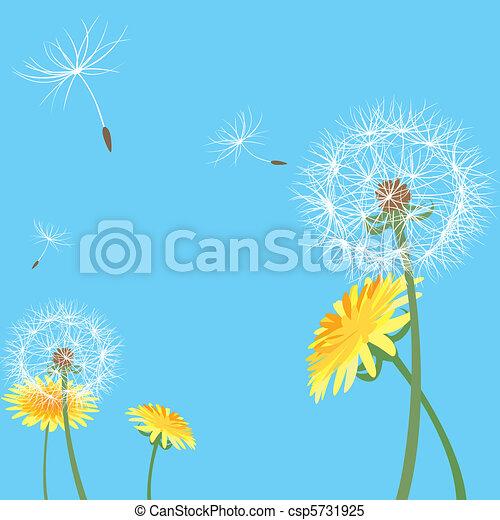Dandelion seeds - csp5731925