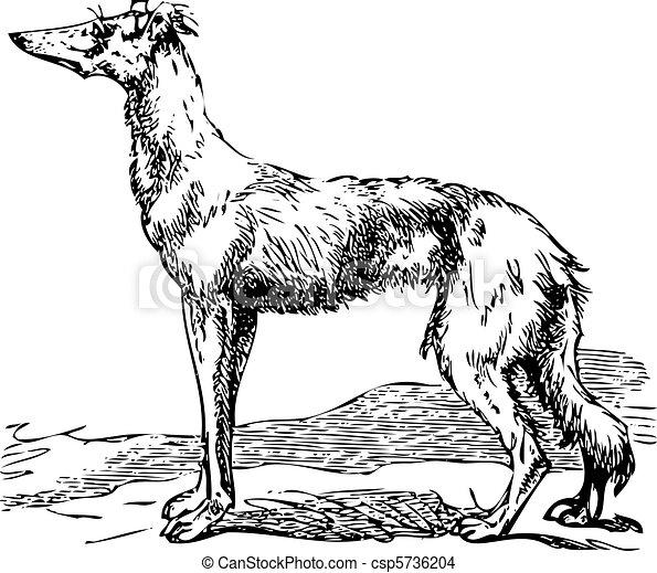 Saluki or Borzoi dog engraving - csp5736204