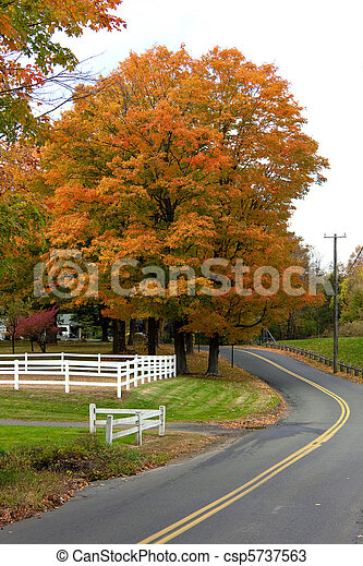 Vibrant Fall Foliage Maple Tree - csp5737563