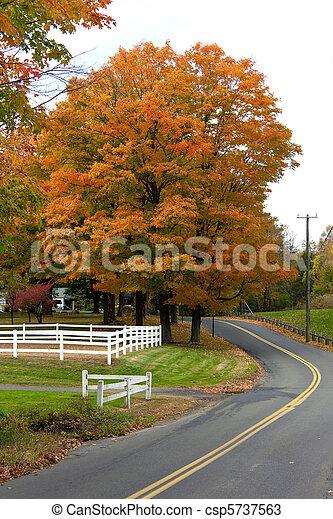 Vibrant Fall Foliage Maple Tree - csp5737563