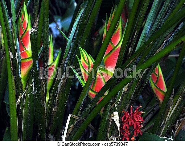Tropische Bloemen Kopen Tropische Bloemen