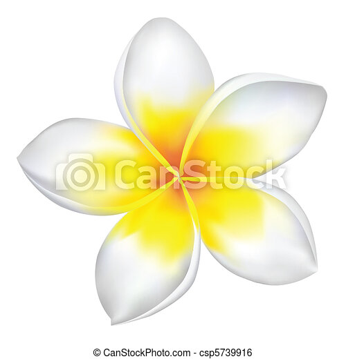 Plumeria Flower Line Drawing Vector frangipani isolated on