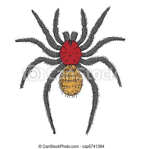 Araña, caricatura - csp5741394