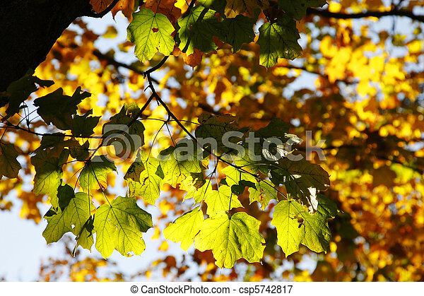 Colorful Autumn Leaves in Trees - csp5742817