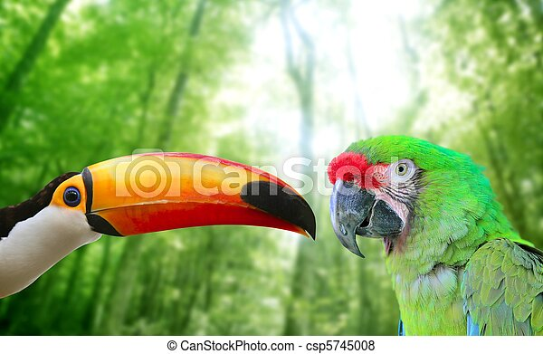 Toco toucan and Military Macaw Green parrot - csp5745008