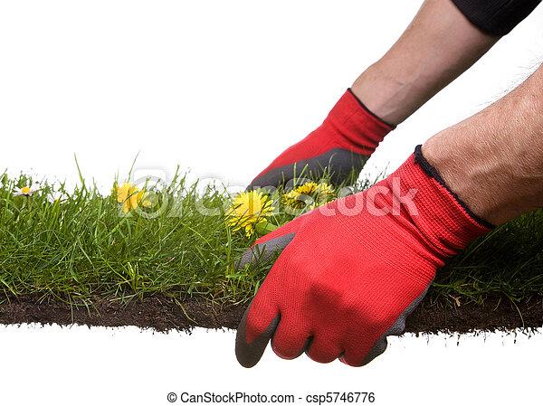 gardening - csp5746776